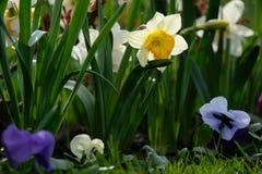 Fleurs de floraison de source photographie stock