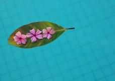 Fleurs de flottement Photographie stock