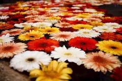 Fleurs de flottement colorées photo libre de droits