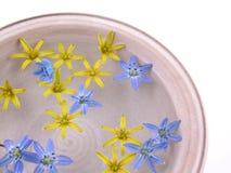 Fleurs de flottement de source Image stock