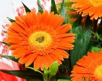 fleurs de fond d'automne Photographie stock
