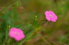 Fleurs de forêt dans l'herbe Photographie stock libre de droits