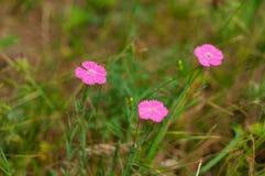 Fleurs de forêt dans l'herbe Photo libre de droits