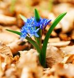 Fleurs de forêt de source Photographie stock