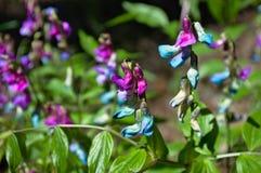 Fleurs de forêt en clairière ensoleillée Images stock