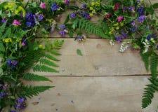 Fleurs de forêt sur un fond en bois Photographie stock