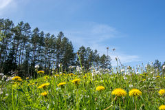 Fleurs de Forst photo libre de droits
