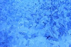 Fleurs de Frost Photographie stock