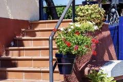 Fleurs de géranium de pot sur des escaliers d'une balustrade Images libres de droits