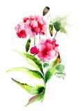 Fleurs de géranium et de pavot illustration stock
