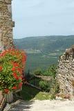 Fleurs de géranium et vues de la vallée Image libre de droits