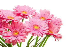 Fleurs de Gerber Image libre de droits