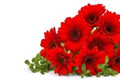 Fleurs de Gerbera photographie stock