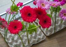 Fleurs de Gerbera dans la boîte à oeufs Photographie stock