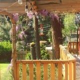 Fleurs de glycine sur la pergola en bois Accrocher de conducteur de colibri image libre de droits