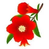 Fleurs de grenade Images stock