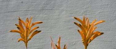 Fleurs de Heliconia Photographie stock libre de droits