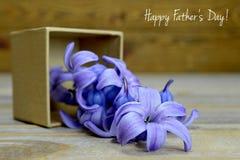 Fleurs de jacinthe dans le boîte-cadeau Photos stock