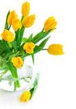 Fleurs de jacinthe de source avec les lames vertes Photo libre de droits