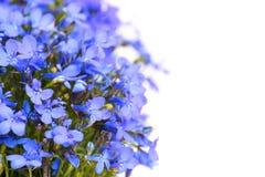 Fleurs de jardin Images stock