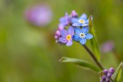 Fleurs de jardin Photos libres de droits