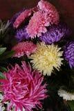 Fleurs de jardin Photo stock