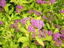 Fleurs de jardin image libre de droits