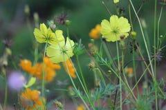 Fleurs de jardin Photo libre de droits