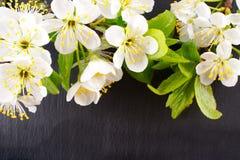Fleurs de jardin au-dessus du fond en pierre de table contexte avec l'espace de copie Photos libres de droits