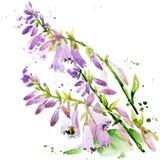 Fleurs de jardin d'été Illustration d'aquarelle Photographie stock libre de droits