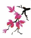 Fleurs de jardin d'aquarelle d'isolement sur le fond blanc, illustration de vecteur de style japonais Photographie stock libre de droits