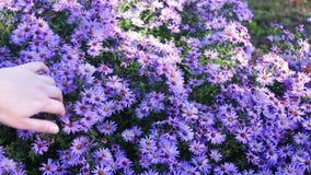 Fleurs de jardin d'automne banque de vidéos