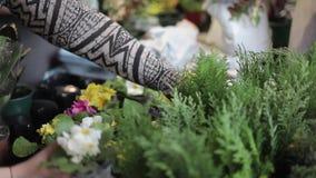 Fleurs de jardin dans les branches de pot et de genévrier Vue de plan rapproché banque de vidéos