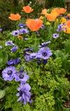Fleurs de jardin de ressort Photos libres de droits