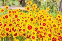 Fleurs de jardin en pleine floraison image stock