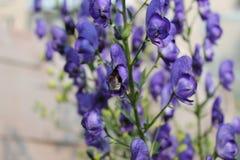 Fleurs de jardin pendant l'été Photos stock
