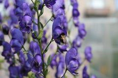 Fleurs de jardin pendant l'été Image stock