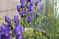 Fleurs de jardin pendant l'été Photo stock