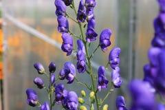 Fleurs de jardin pendant l'été Image libre de droits