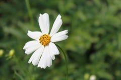Fleurs de jardin pendant l'été Photographie stock
