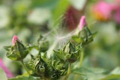 Fleurs de jardin pendant l'été Photos libres de droits