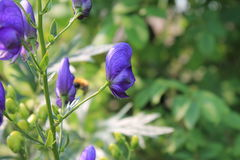 Fleurs de jardin pendant l'été Images stock