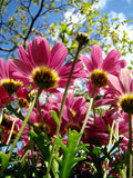 Fleurs de jardin sauvage Image stock