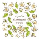 Fleurs de jasmin réglées Illustration Stock