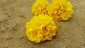 Fleurs de jaune de Nika Photo stock