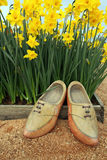 Fleurs de jonquille et chaussures en bois photo stock