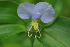 Fleurs de jour Photos stock
