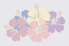 Fleurs de ketmie Photo libre de droits