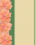 Fleurs de ketmie sur le fond de toile Images libres de droits