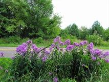 fleurs de l'amour Photo libre de droits
